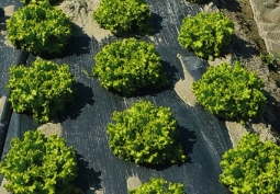 REVOLVE: Agriculture's Second Green Life