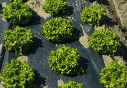 REVOLVE: La Segunda Vida Verde de la Agricultura