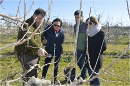 EEAD-CSIC prepares for the trials with fruit trees
