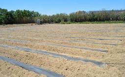 Comienzan las plantaciones con biomulching