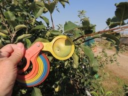 EEAD-CSIC coloca las primeras bolsas protectoras biodegradables