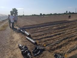 Comienzan los ensayos a gran escala con el mulching biodegradable