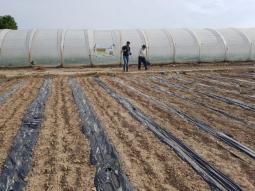 Se plantan pepinos, pimientos y tomates para el segundo período de validación