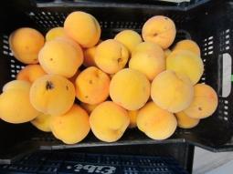 Cosecha de frutas