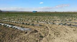 Plásticos biodegradables para uso agrícola